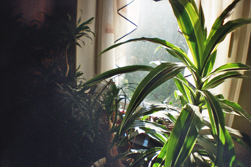 Home jungle analog